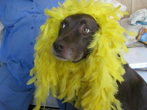Chesty La Rue's dog Duggan